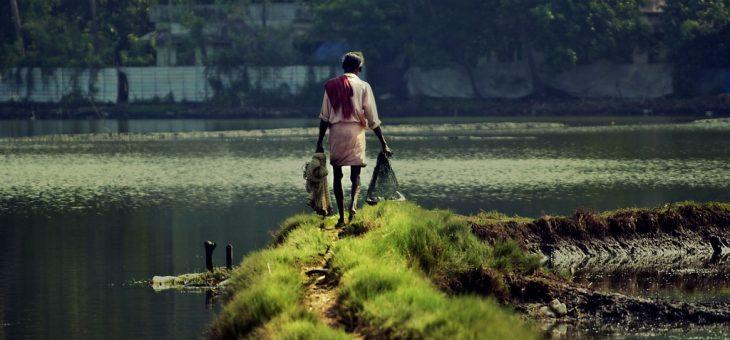 INDIA: Paddy crop failure hits Nuapada farmers hard